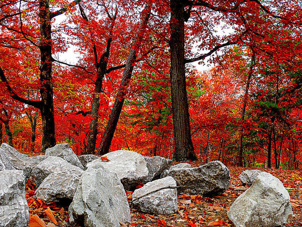 Rocks Art Print featuring the photograph The Woods by Kevin Jackson