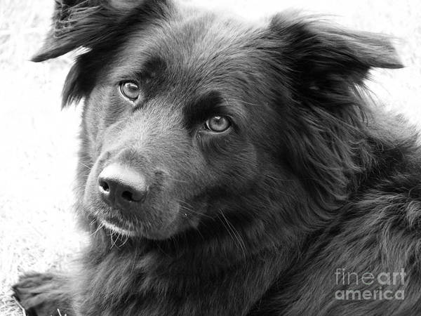 Dog Art Print featuring the photograph Thinking by Amanda Barcon