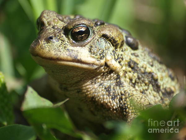Green Art Print featuring the photograph This Is My Good Side by Vivian Martin