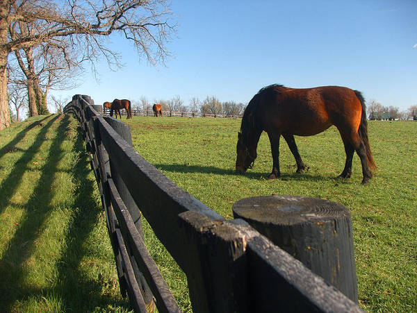 Horse Art Print featuring the photograph Thoroughbred Horses In Kentucky Pasture by Dave Chafin