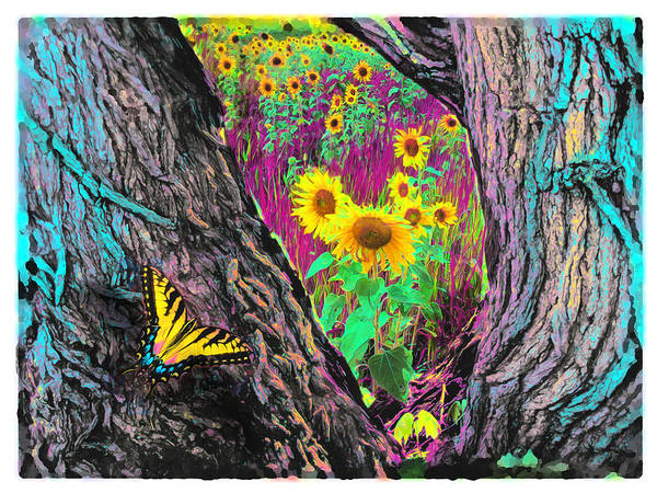 Butterfly Posters Art Print featuring the photograph Through The Trees by Gina Signore