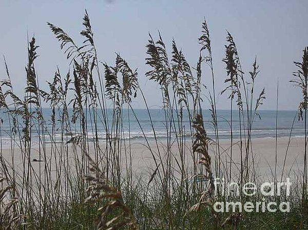 Florida Beach Near St. Augustine Art Print featuring the photograph Thru The Sea Oats by Barb Montanye Meseroll