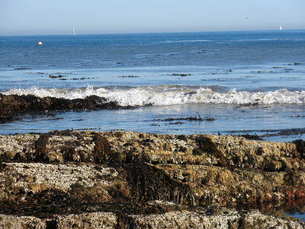 Beach Art Print featuring the photograph Tide Pools by Siobhan Yost