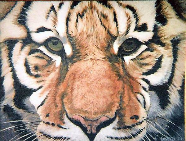 Tiger Art Print featuring the painting Tiger by Steve Greco
