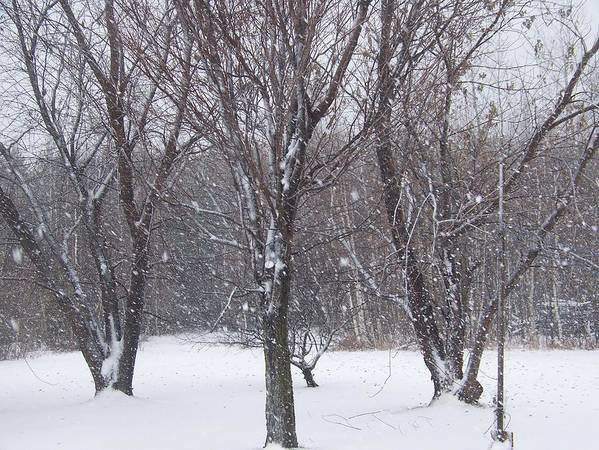 Snow Art Print featuring the photograph Today - November 25 - Photograph by Jackie Mueller-Jones