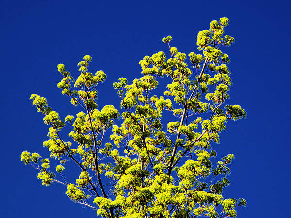Spring Art Print featuring the photograph Tree Next Door Ae 3 by Lyle Crump