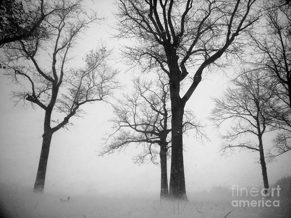 Trees Art Print featuring the photograph Trees In Winter by Mioara Andritoiu