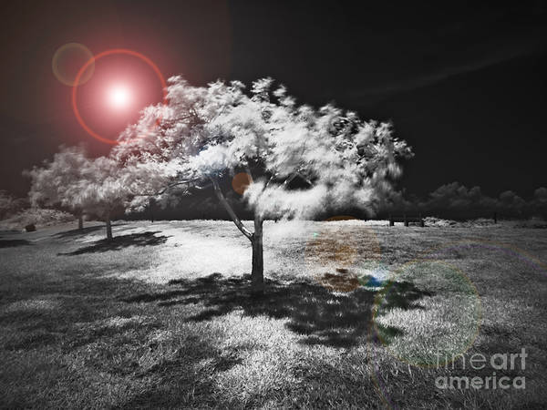 Infrared Art Print featuring the mixed media Trees With Science Fiction Sky 91774031 by Rolf Bertram