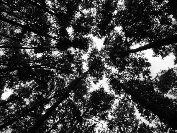 Landscape Art Print featuring the photograph Treetops by Mark Camp