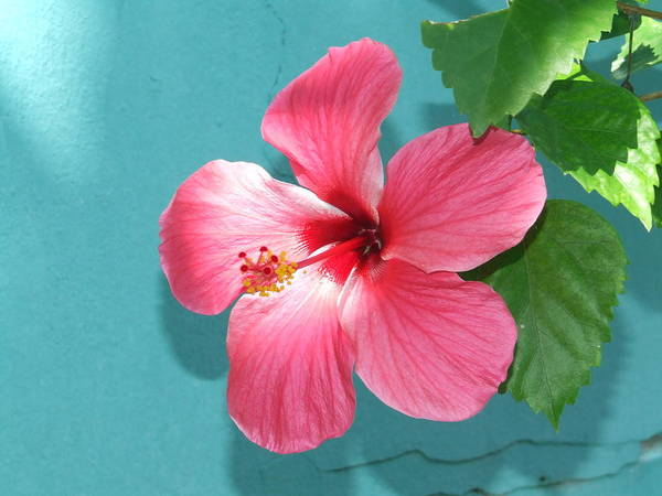 Flower Art Print featuring the photograph Tropical Bloom by Vanda Sucheston Hughes