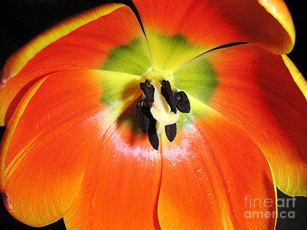 Nature Art Print featuring the photograph Tulips - An Inside Look by Lucyna A M Green