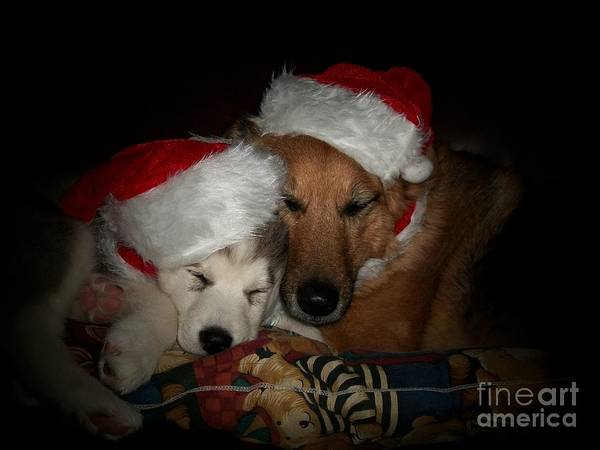 Dog Art Print featuring the photograph Twas The Night Before Christmas by Marjorie Imbeau