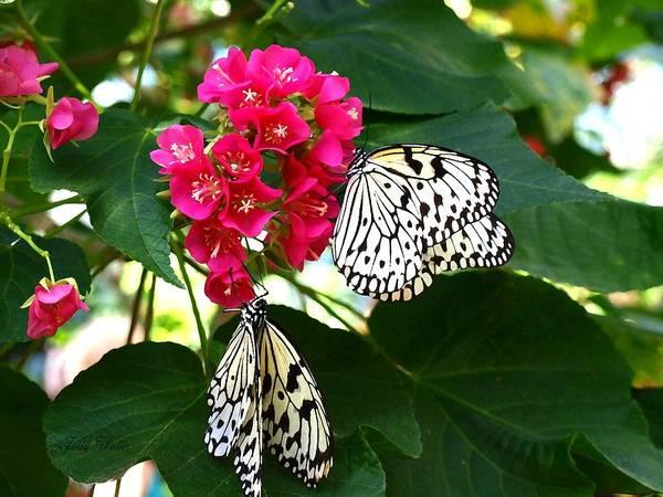 Pink Art Print featuring the photograph Two Butterflies by Judy Waller