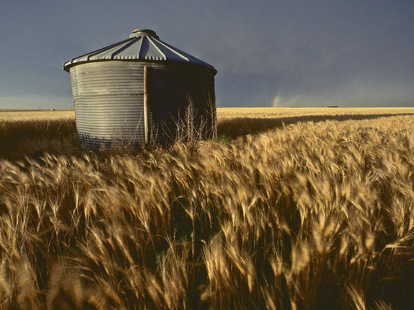 Agriculture Art Print featuring the photograph United States, Kansas Wheat Field by Keenpress