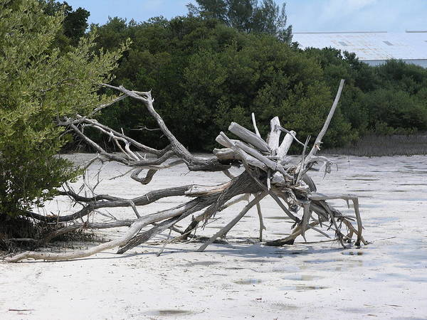Driftwood.beach Art Print featuring the photograph Uprooted by Jim Derks