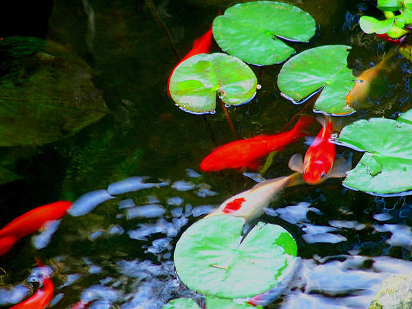 Pond Art Print featuring the photograph Used To Be Home by John Toxey