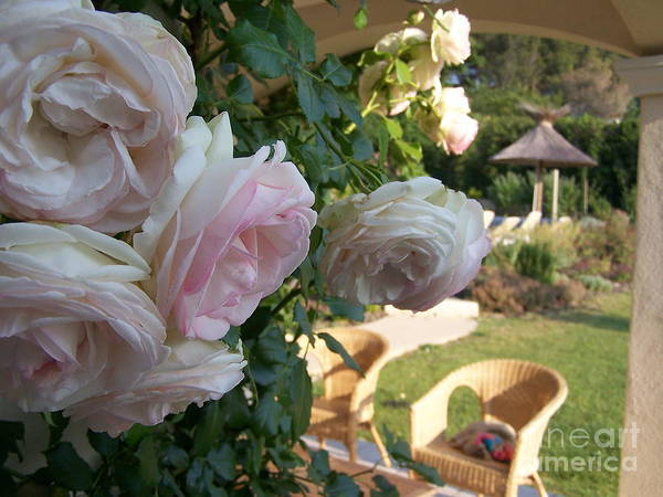 Roses Art Print featuring the photograph Villa Roses by Nadine Rippelmeyer