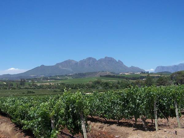 Mountains Art Print featuring the photograph Vineyards Cape Town by Vijay Sharon Govender