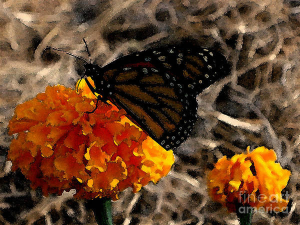 Monarch Art Print featuring the photograph Watercolor Monarch by PJ Cloud