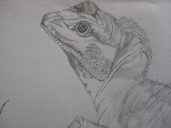 Dragon Art Print featuring the drawing Waterdragon Up Close by Theodora Dimitrijevic