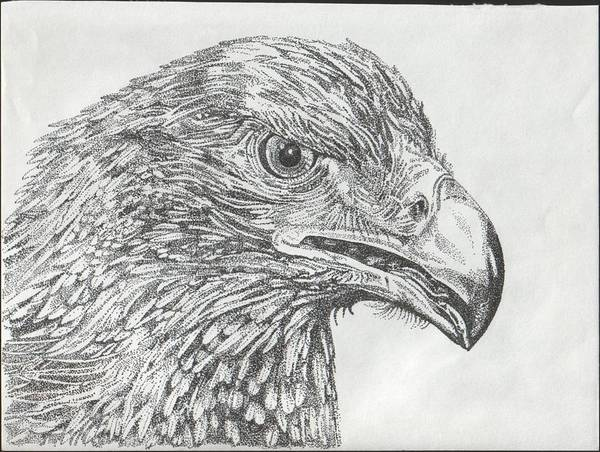 Eagle Art Print featuring the drawing Wedgetail Eagle by Leonie Bell