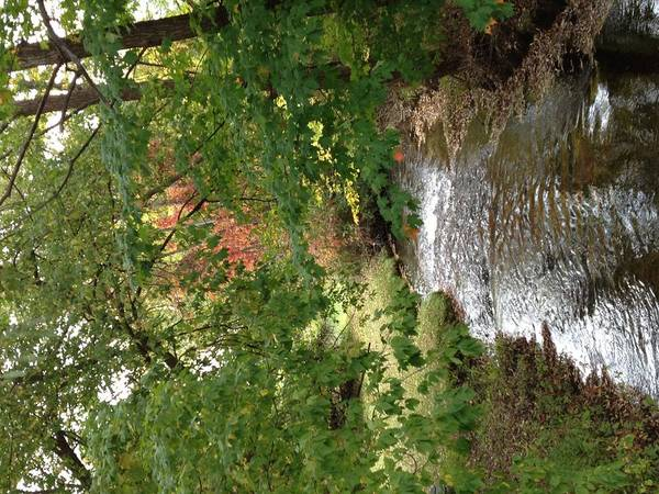 Fall Art Print featuring the photograph West Branch Of The Rifle River by Gail Curtis
