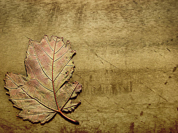 Autumn Art Print featuring the photograph ...while You Fall Apart by Dana DiPasquale