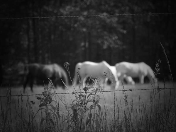 Horses Art Print featuring the photograph Wild Restraint by Jessica Burgett