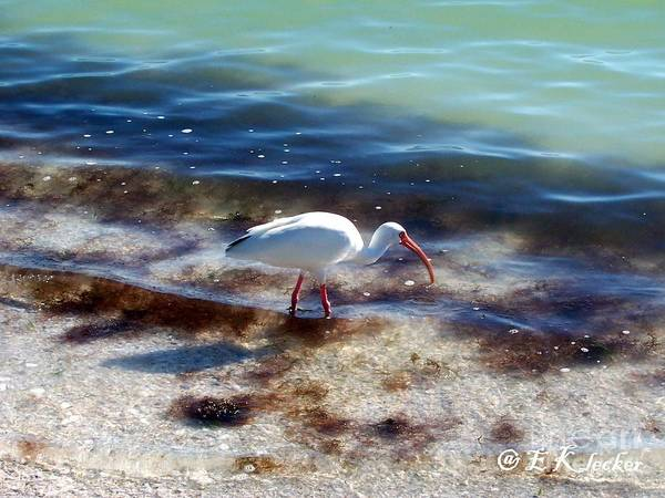 Bird Art Print featuring the photograph Yay Seaweed by Elizabeth Klecker