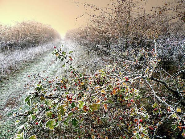 Autumn Art Print featuring the photograph Autumn Frosts by Alex Lim