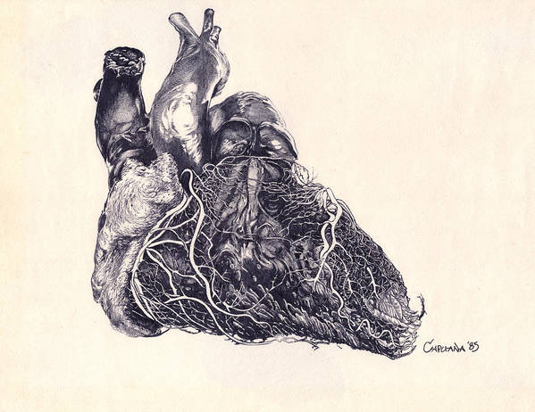 Drawing Art Print featuring the drawing Human Heart by Joseph Capuana