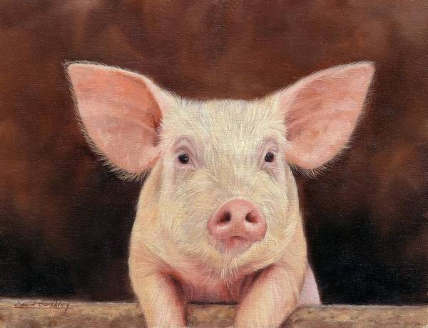 Pig Print featuring the painting Pig by David Stribbling