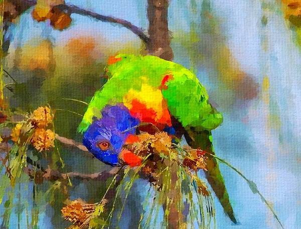 Lorikeet Art Print featuring the painting Rainbow Lorikeet by Chris Butler
