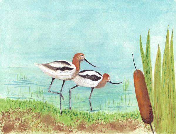 Birds Art Print featuring the drawing American Avocet by Syl Lobato