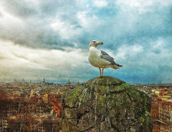 Photo Art Print featuring the painting Gull Over Rome by Jack Zulli