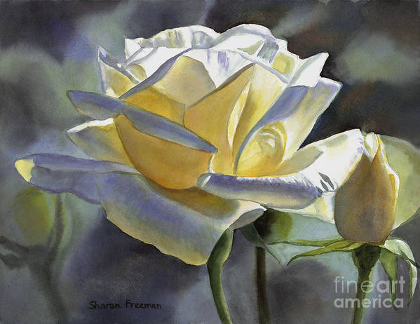 Roses Art Print featuring the painting Hint Of Gold by Sharon Freeman