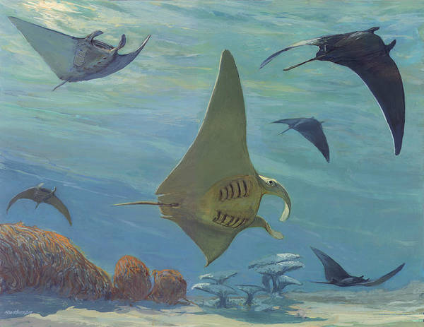 Wildlife Print featuring the painting Manta Ray by ACE Coinage painting by Michael Rothman