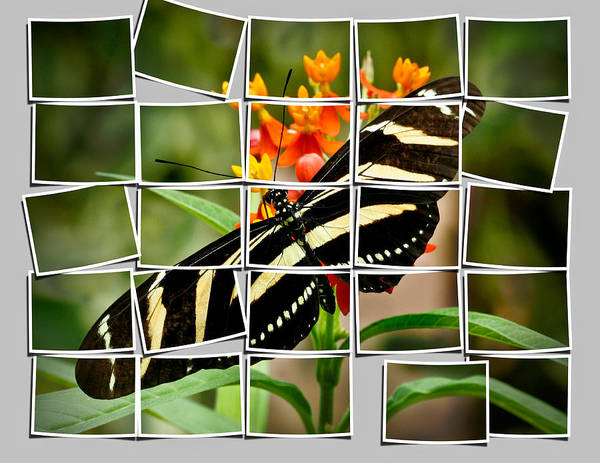 Animals Art Print featuring the photograph Messed Up Butterfly by Jean Noren
