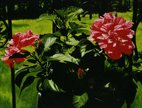 Floral Art Print featuring the painting Red Hibiscus by Gary Hernandez