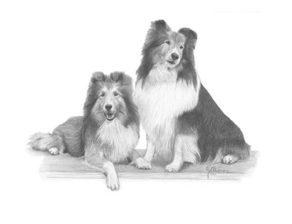 Pencil Drawing Print Art Print featuring the drawing Shelties by Joe Olivares