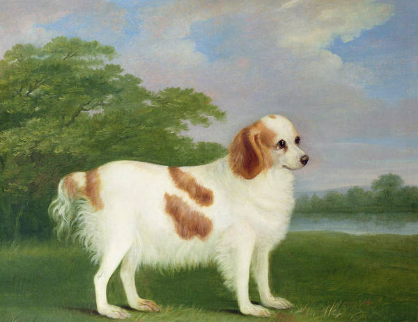 Primitive Art Print featuring the painting Spaniel In A Landscape by John Nott Sartorius