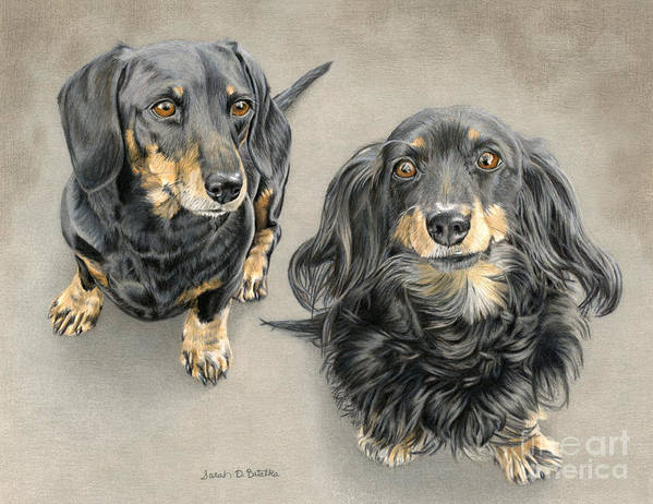 Dachshund Art Print featuring the painting The Long And Short Of It by Sarah Batalka