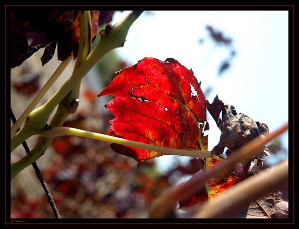 Vine Art Print featuring the photograph Vine Leaf At Fall. 02 by Arik Baltinester