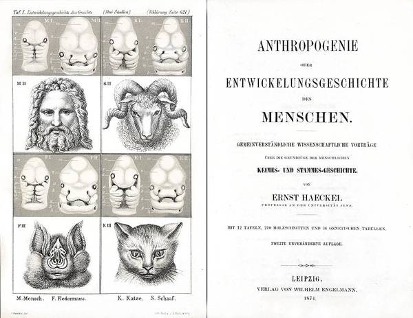 Book Art Print featuring the photograph 1874 Frontis Haeckel Anthropogenie by Paul D Stewart