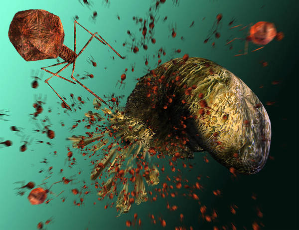 T-phage Art Print featuring the photograph Bacteriophage Viruses by Karsten Schneider