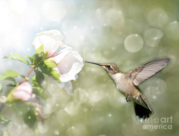 Althea Art Print featuring the photograph Beauty In Flight by Sari ONeal
