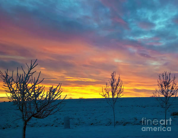 Flora Print featuring the photograph Larimer County Winter Sunrise by Harry Strharsky