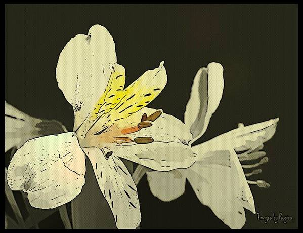 Flower Art Print featuring the photograph Lily Light by Regina Arnold