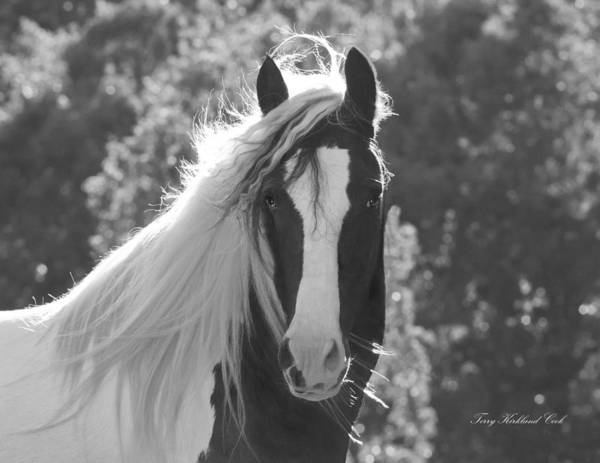Equine Art Print featuring the photograph Mesmerizing Eyes by Terry Kirkland Cook