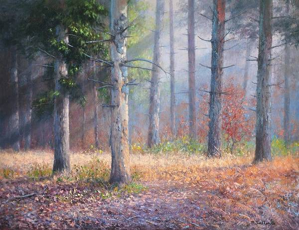 Forest Pinetrees Sunrays Woods Art Print featuring the painting Pinewoods by Richard Sellence